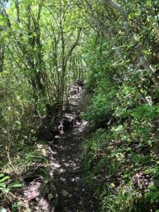 Tauhara hike